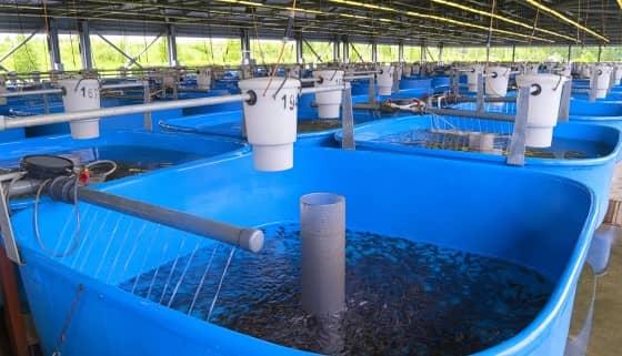 AI、5G與視覺機器聯手轉型水產養殖業