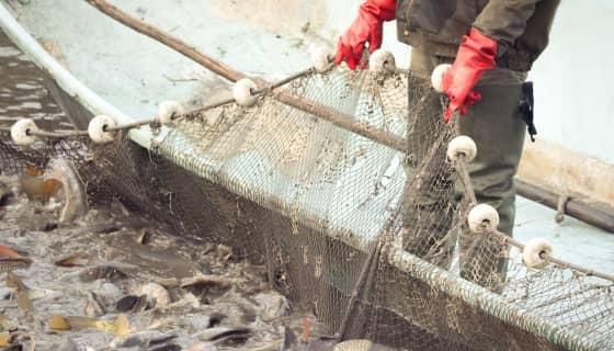 智慧漁業-應用數位科技於水產養殖上