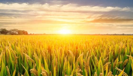 高度仰賴農藥的日本, 倡導 IPM病蟲害綜合管理達永續農業經營