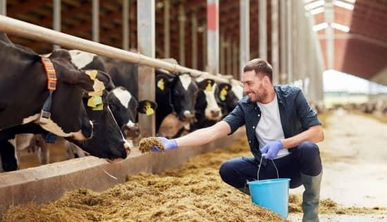 應用智慧項圈以推動酪農業之發展